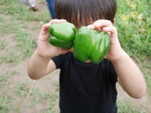 やまびこ幼稚園で体験登園!6月は、夏野菜の収穫体験を楽しんだよ